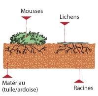 microfissure