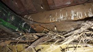 avant toit fiente oiseau pare moineaux closoir peigne