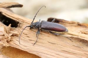 les parasites du bois Az aceton szaga van a számban