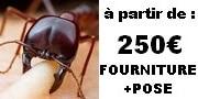 fourmis charpentieres prix traitement pas cher