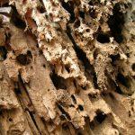 termite_traitement_eradiquer_tuer_detruire