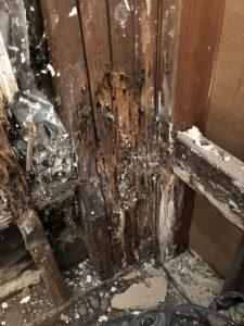 merule degat sur murs interieur traitement par air chaud chaleur