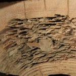 termite degats sur bois identification