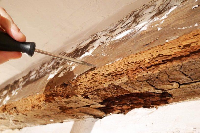 termites traitement diagnostic termite