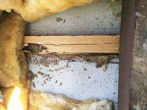 termite traitement gard gironde gers var tarn midi pyrenees orientales landes charente dordogne