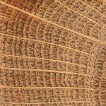 Bois de chene anneau de croissance structure interne