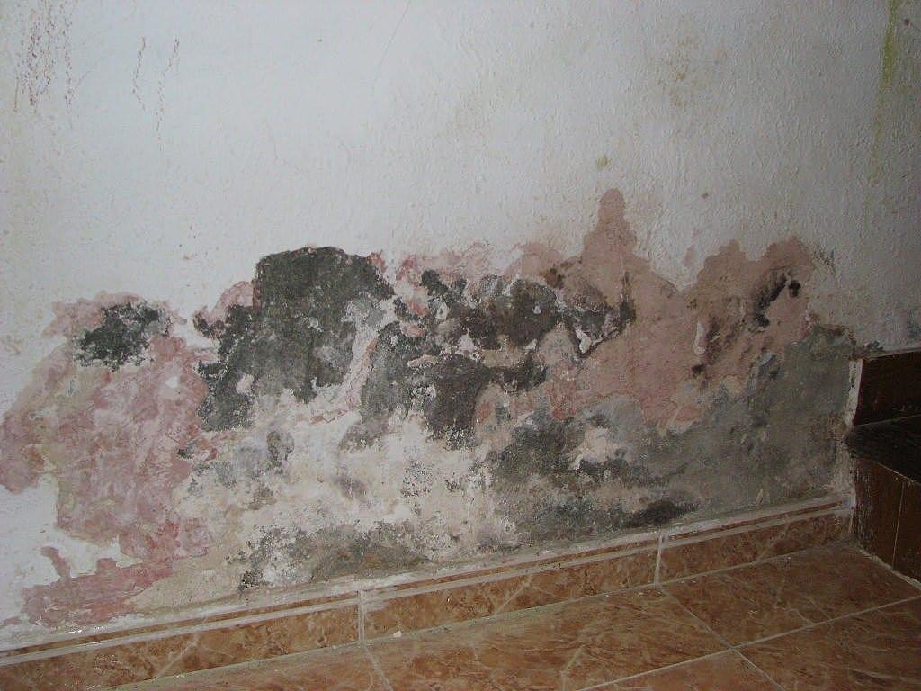 Devis Traitement Humidité à Ozoir-la-Ferrière ▷ Coût : Entreprise, diagnostic remontées capillaires murs