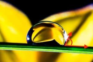 image de l'eau sur lotus effet lotus hydrofuge perlant