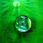 image d'une goutte hydrofuge sur une feuille hydrophobe